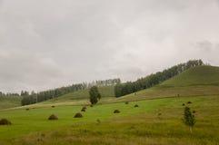 Berg Grönt fält med toner av guling med höstackar och träd långt borta Sommar Augusti royaltyfria foton