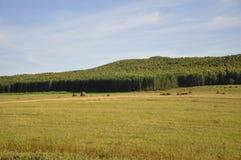 Berg Grönt fält med toner av guling med höstackar och träd långt borta Sommar Augusti royaltyfria bilder