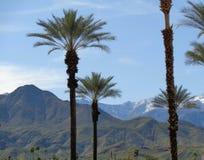 Berg, Hügel u. Palmen Stockbilder