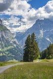 Berg het biking in Grindelwald, Zwitserland royalty-vrije stock fotografie