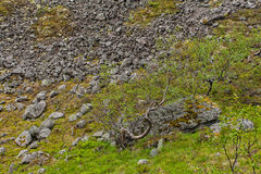 Berg Hibiny, Colahalvön, Nord, sommar, mörker fördunklar Arkivbilder