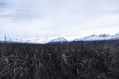 Berg i Alaska arkivbilder