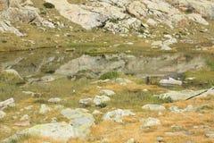Berg i den Tena dalen, Pyrenees Panticosa Arkivbilder