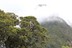 Berg i dimman Arkivbild