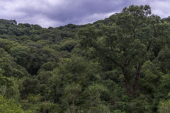 Berg i Latinamerika Arkivbilder