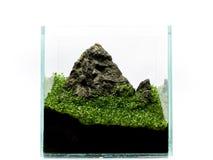 Berg i miniatyr i akvarium, med växter royaltyfria bilder