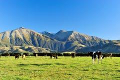 Berg i Nya Zeeland Arkivbild