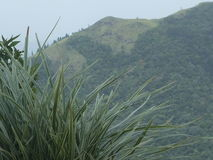 berg i Sri Lanka Arkivfoto
