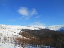 Berg i vinter, Carpathians, Ukraina royaltyfria bilder