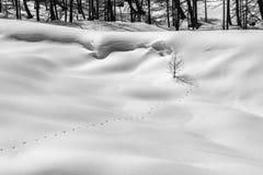 Berg i vinter Spår av det lösa djuret på det insnöat en bergskog Royaltyfria Bilder