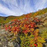 Berg im Herbst Lizenzfreie Stockfotografie