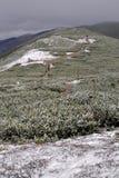 Berg Krkonose Arkivbild