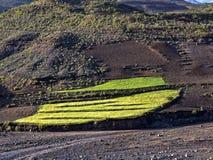 Berg kultivierte Ackerland, Äthiopien lizenzfreies stockfoto
