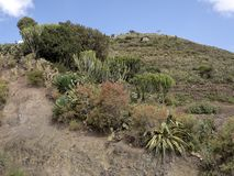 Berg kultivierte Ackerland, Äthiopien stockfotos
