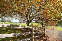 Berg-Landsc-Affe in Autumn Fall Lizenzfreie Stockbilder