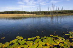 Berg landskap för sommar för sjöträd Arkivfoto