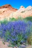 Berg landskap med blomningbuskar royaltyfri fotografi