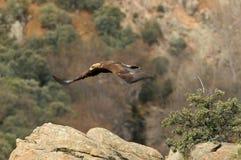Berg landskap med guld- flyga för örnar Royaltyfria Foton
