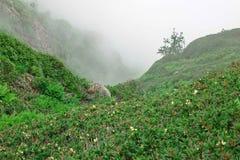 Berg Lanscape in den Fogy-schlechtes Wetter-und Edelweiß-Blumen Clos lizenzfreies stockbild