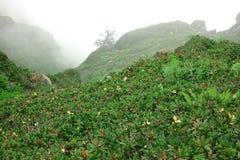 Berg Lanscape in den Fogy-schlechtes Wetter-und Edelweiß-Blumen Clos stockbild