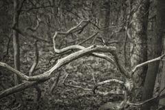 Berg Laurel Branches royaltyfri fotografi