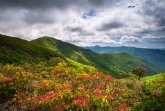 Berg Laurel Spring Flowers Blooming i Appalachian berg royaltyfri bild