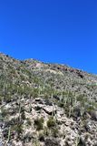 Berg Lemmon, Tucson, Arizona, Vereinigte Staaten stockfoto