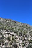 Berg Lemmon, Tucson, Arizona, Vereinigte Staaten stockbilder
