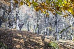 Berg lopp, natur, härligt ställe, djur arkivfoton