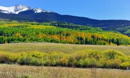 Berg med den färgrika grön och röd aspen för guling, under lövverksäsong Royaltyfri Fotografi
