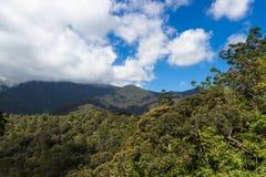Berg med djungeln och molnig himmel Royaltyfri Fotografi