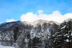 Berg med insnöad dagsljusvinter Arkivfoton