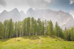Berg med skogen royaltyfria foton