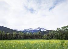 Berg med snö- och gulingsommarblommor near barcelonnette i alpes de provence royaltyfria bilder