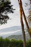 Berg med trädstammar i Levico Termen, Italien royaltyfri fotografi