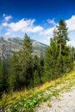 Berg med trees Fotografering för Bildbyråer