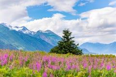 Berg met de bloemen en bewolkte hemel Alaska van het voorgrondwilgeroosje royalty-vrije stock fotografie