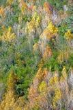 Berg met rood geel blad Stock Afbeeldingen