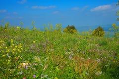 Berg met tot bloei komend gebied van verschillende bloemen in de lente royalty-vrije stock afbeeldingen