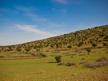 Berg mit Bäumen Lizenzfreie Stockfotografie