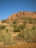 Berg mit Büschen und Gras Lizenzfreie Stockfotos