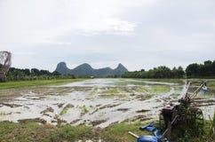 Berg mit Reisfeld und -reflexion auf Wasser im Paddy Lizenzfreies Stockbild