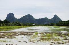 Berg mit Reisfeld und -reflexion auf Wasser im Paddy Lizenzfreie Stockbilder