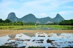 Berg mit Reisfeld und -reflexion auf Wasser im Paddy Lizenzfreie Stockfotografie