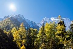 Berg mit Schnee- und Kiefernwald Lizenzfreie Stockfotografie