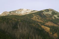 Berg mit Wald Lizenzfreie Stockbilder