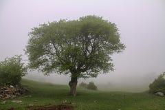 Berg am Nebel, am Nebel und am Baum der Iran, Gilan, Rasht stockfoto