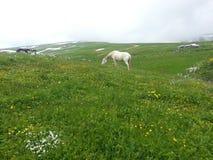 Berg och ängar, beta för hästar royaltyfri foto