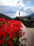 Berg och blommor Royaltyfri Foto