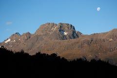 Berg och en skog nära Glenorchy i Nya Zeeland arkivfoto